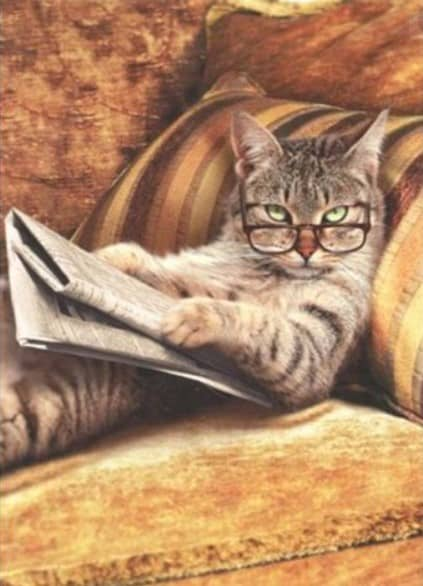 cat reading newspaper for UPSC